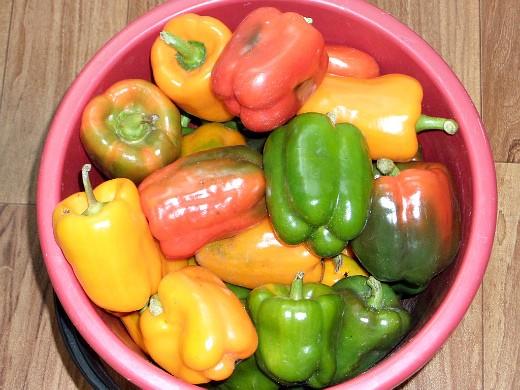 особенности выращивания овощей в северных районах - урожай сладкого перца
