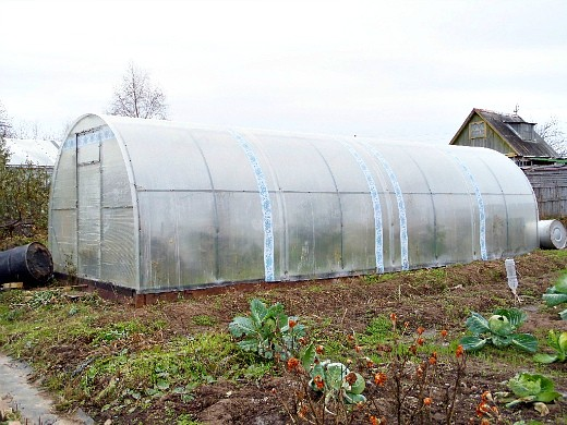 марганцовка на огороде, применение в теплице