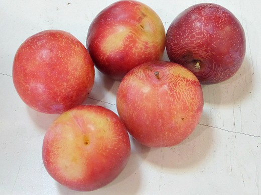 почему на сливе нет плодов 1-4