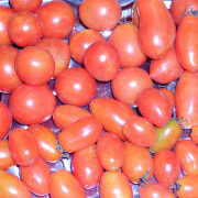 лучшие сорта помидор с фото и описанием 1