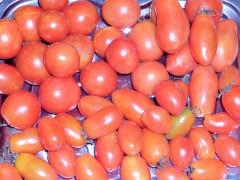 Томат Дынюшка F1 (Дыневый мед премиум): отзывы об урожайности помидоров, фото семян, описание и характеристика сорта