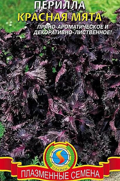 перилла кустарниковая - описание и выращивание, семена сорт красная мята