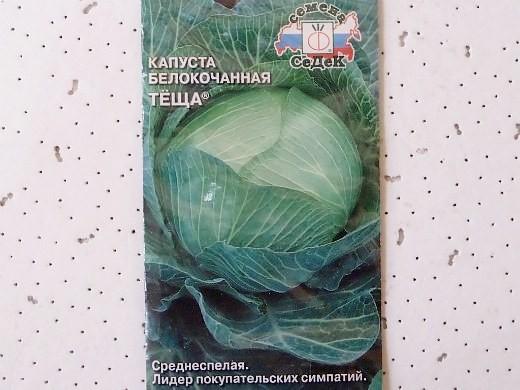 лучшие сорта капусты белокочанная тёща