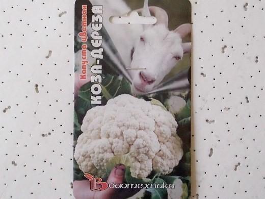 лучшие сорта капусты цветная коза-дереза