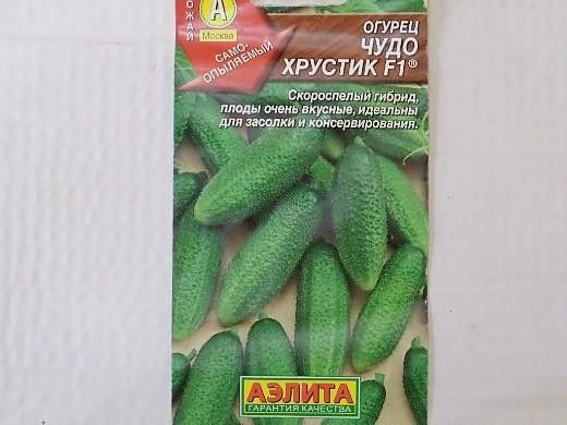 лучшие сорта огурцов для открытого грунта и теплицы - семена чудо хрустик f1