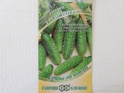 лучшие сорта огурцов для открытого грунта и теплицы - семена гирлянда f1