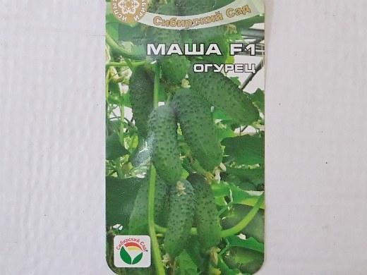 лучшие сорта огурцов для открытого грунта и теплицы - семена маша f1