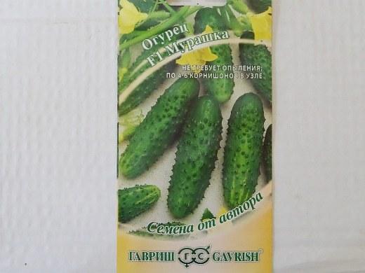 лучшие сорта огурцов для открытого грунта и теплицы - семена f1 мурашка