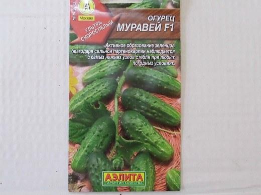 лучшие сорта огурцов для открытого грунта и теплицы - семена муравей f1