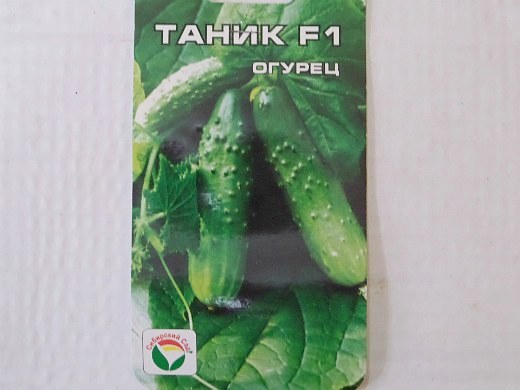 лучшие сорта огурцов для открытого грунта и теплицы - семена таник f1