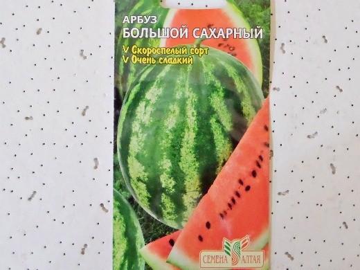 лучшие сорта арбузов с фото и описанием - большой сахарный