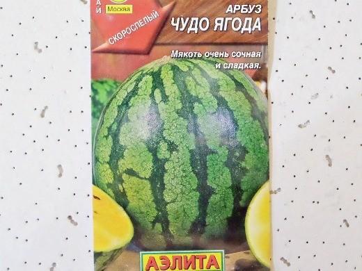 лучшие сорта арбузов с фото и описанием - чудо ягода