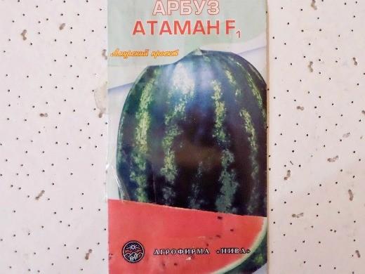 лучшие сорта арбузов с фото и описанием - атаман f1