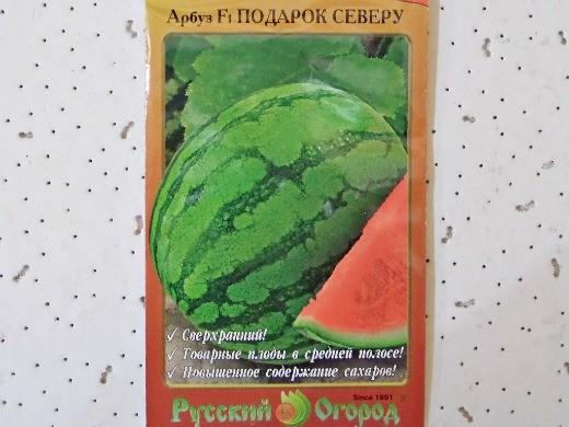 лучшие сорта арбузов с фото и описанием - подарок северу f1