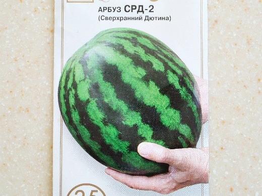 лучшие сорта арбузов с фото и описанием - срд-2 сверхранний дютина