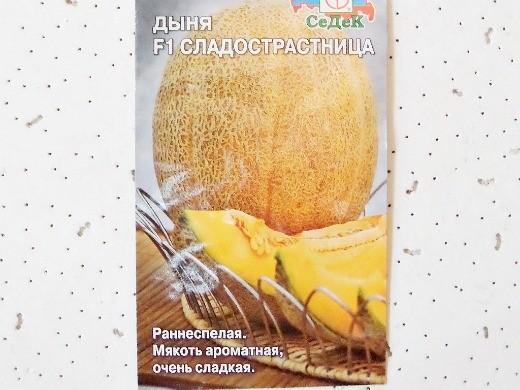 лучшие сорта дыни для открытого грунта и теплицы - f1 сладострастница