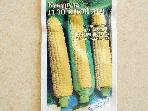 лучшие сорта кукурузы для любых регионов россии - f1 золотой лед