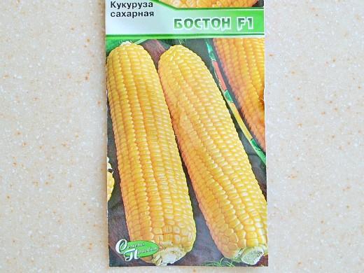 лучшие сорта кукурузы для любых регионов россии - сахарная бостон f1