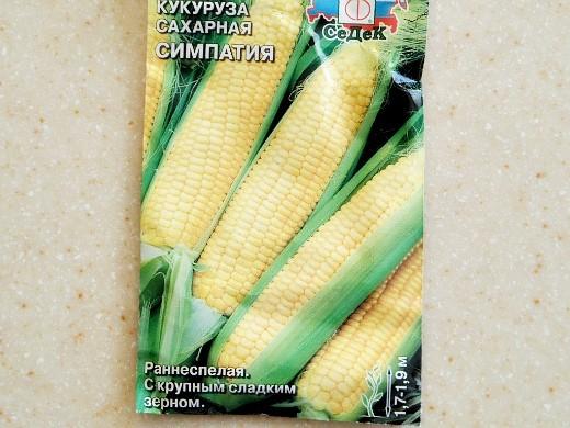 лучшие сорта кукурузы для любых регионов россии - сахарная симпатия f1