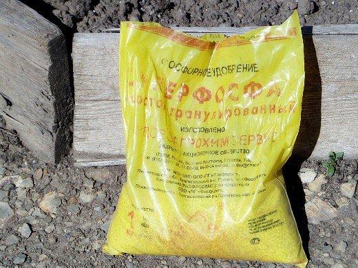 удобрения для чеснока при посадке весной и осенью - простой суперфосфат