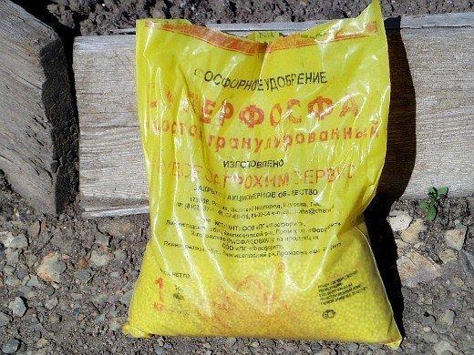 удобрения для моркови при посадке весной и осенью - суперфосфат