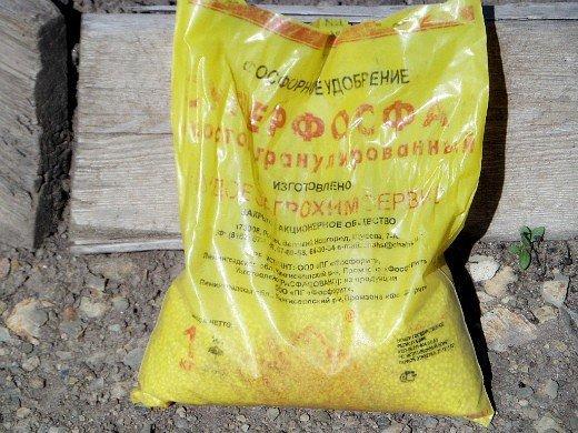 удобрения для кукурузы при посадке и выращивании - суперфосфат