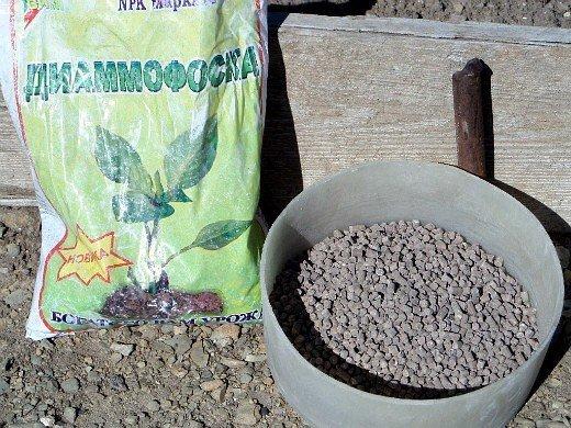 удобрения для свеклы при посадке и выращивании - диаммофоска