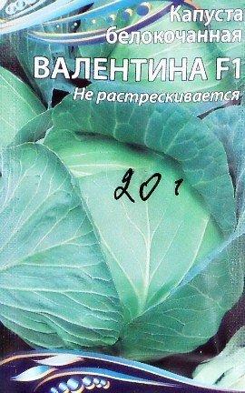 как повысить урожайность капусты в открытом грунте - белокочанная семена сорт f1 валентина