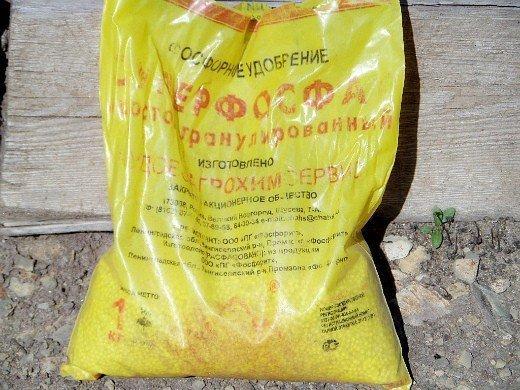 как повысить урожайность сладкого перца - удобрение суперфосфат