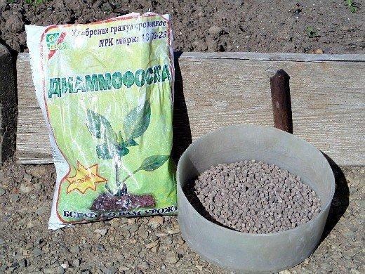 как повысить урожайность сливы - минеральное комплексное удобрение диаммофоска
