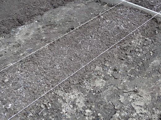 диаммофоска удобрение применение - картофельная грядка