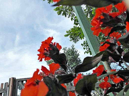 Цветы на фоне неба и облаков (фото)