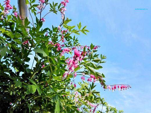 цветы на фоне неба и облаков фото 5 - разбитое сердце