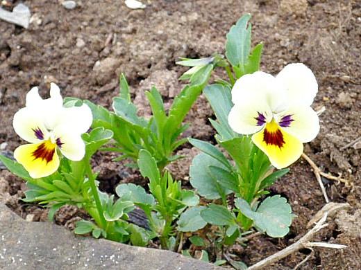 Цветы для сада фото и названия