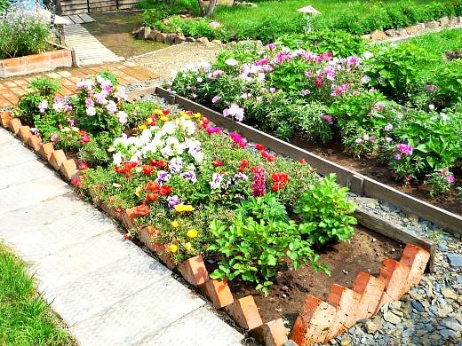 клумбы - цветы для сада фото и названия