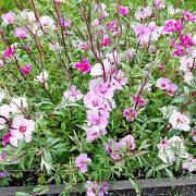 цветы для сада, фото и названия