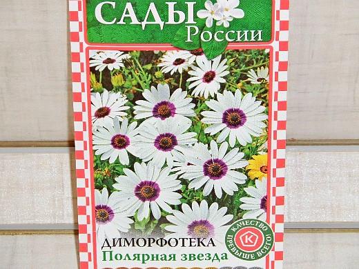 цветы диморфотека, посадка и уход 1