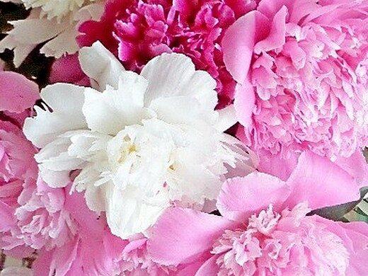 Варенье из цветов — пять простых и вкусных рецептов